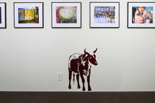 cow and wall photos at lux